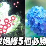 戀愛成就運UP! 日本人求姻緣的必勝地!