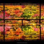 2016年京都紅葉貼文合集